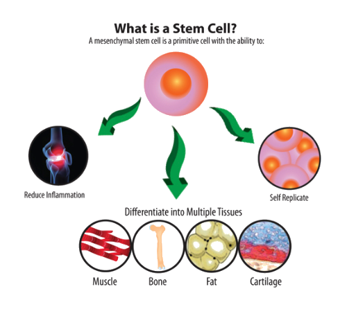 stem-cell-therapy-melbourne-fl