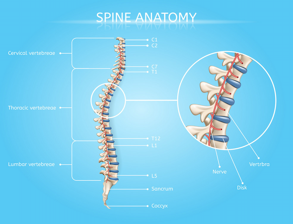 spine and disc pain